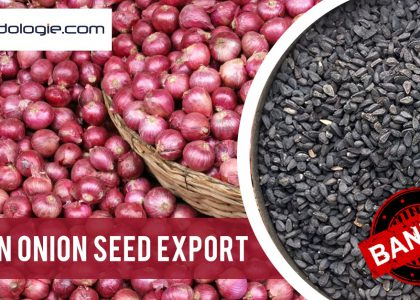 India bans export of onion seed
