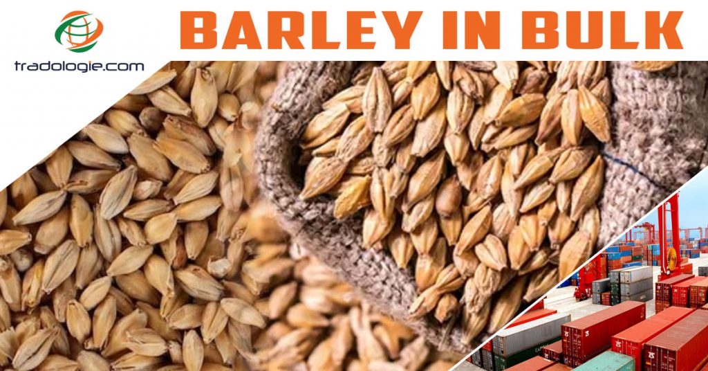 Buy Bulk Barley from Manufacturers