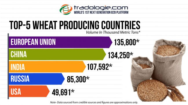 Top 5 Wheat Producing Countries